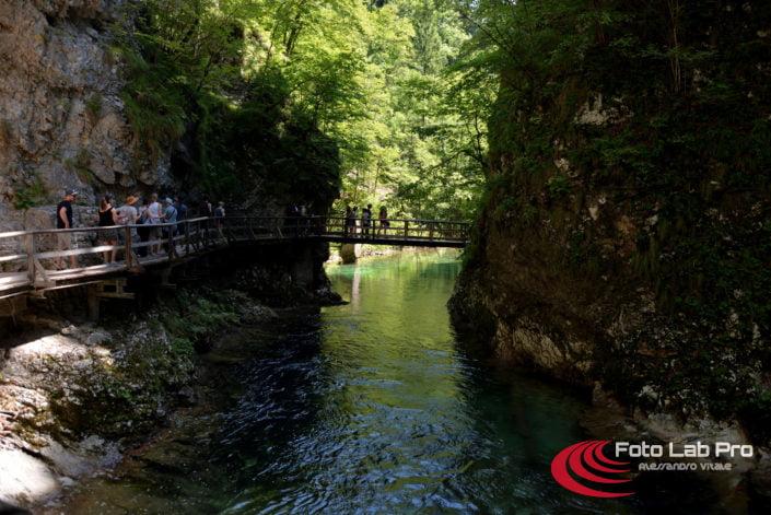 La Gola del Vintgar - Bled